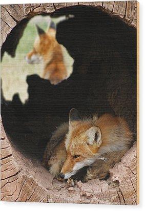 Red Fox Dreaming Wood Print by Ernie Echols