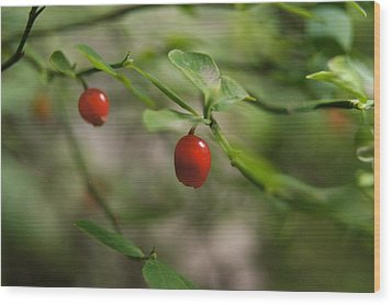 Red Huckleberry Wood Print by Angi Parks