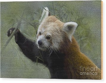 Red Panda Wood Print by Heiko Koehrer-Wagner