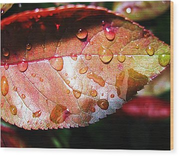 Red Rain Wood Print by Todd Sherlock