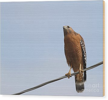 Red-shouldered Hawk . 7d10252 Wood Print by Wingsdomain Art and Photography