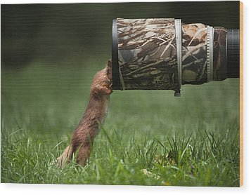 Red Squirrel Inspecting A Camera Lens. Wood Print by Andy Astbury