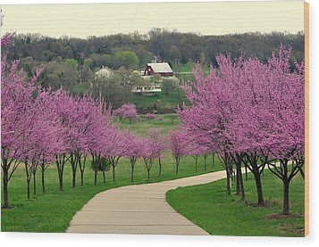 Redbud Wood Print by Marty Koch