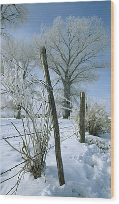 Rime From Rare Fog Coats Fence Wood Print by Gordon Wiltsie
