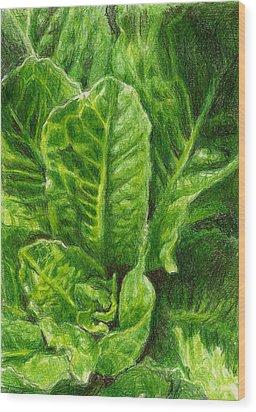 Romaine Unfurling Wood Print by Steve Asbell
