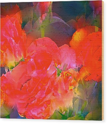 Rose 144 Wood Print by Pamela Cooper
