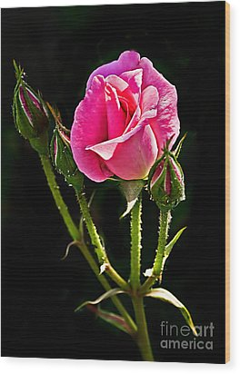 Rose And Buds Wood Print by Robert Bales