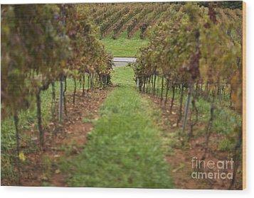 Rows Of Grape Vines Wood Print by Roberto Westbrook