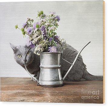 Russian Blue 03 Wood Print by Nailia Schwarz