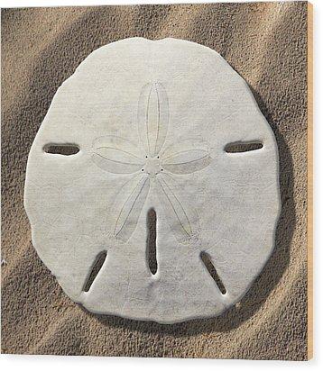 Sand Dollar Wood Print by Mike McGlothlen
