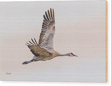Sandhill Crane N3 Wood Print by Fred J Lord