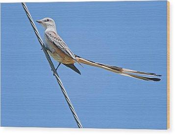 Scissor-tailed Flycatcher Wood Print by Bonnie Barry
