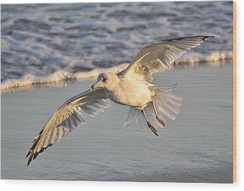 Sea Gull At Twilight Wood Print by Paulette Thomas