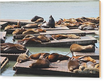 Sea Lions At Pier 39 San Francisco California . 7d14316 Wood Print by Wingsdomain Art and Photography