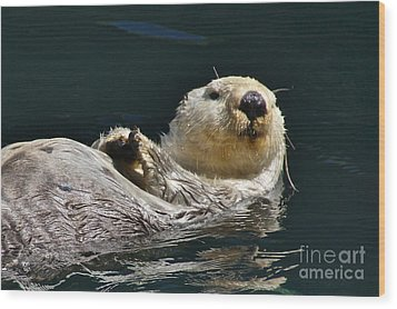 Sea Otter Wood Print by Sean Griffin