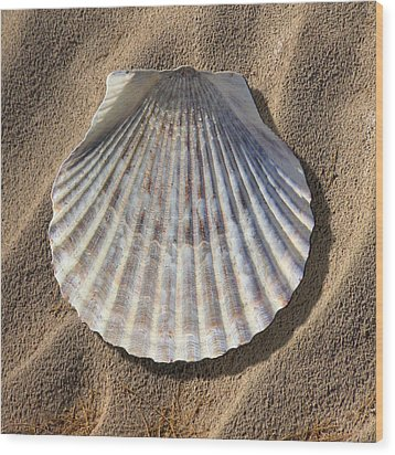 Sea Shell 2 Wood Print by Mike McGlothlen