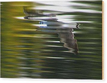 Seagull 2 Moewe 2 Wood Print by H a r a l d B e r t l i n g