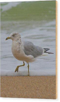 Seagull Stomp Wood Print by Betsy Knapp