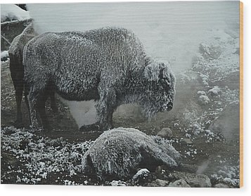 Shaggy With Rime, An American Bison Wood Print by Michael S. Quinton