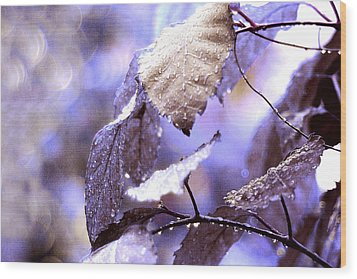 Silver Rain. The Garden Of Dreams Wood Print by Jenny Rainbow