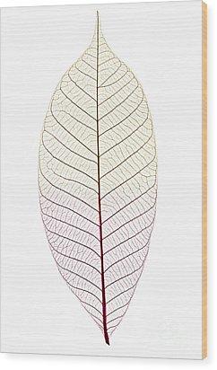 Skeleton Leaf Wood Print by Elena Elisseeva