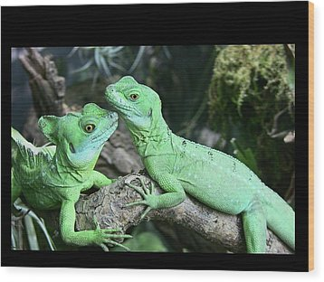 Small Iguanas Stirnlappenba Wood Print by Rolf Bach