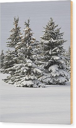 Snow Covered Evergreen Trees Calgary Wood Print by Michael Interisano