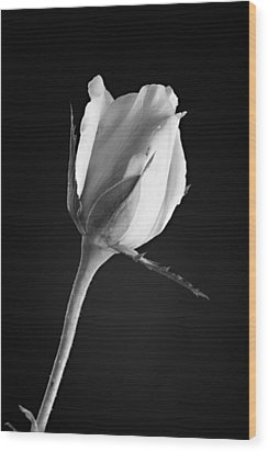 Soft Rose Black And White Wood Print by M K  Miller