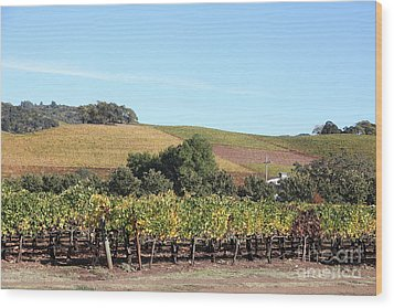 Sonoma Vineyards - Sonoma California - 5d19307 Wood Print by Wingsdomain Art and Photography