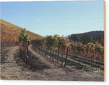 Sonoma Vineyards - Sonoma California - 5d19311 Wood Print by Wingsdomain Art and Photography