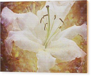 Sparkling Lily Wood Print by Clare Bambers
