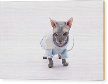 Sphynx Hairless Cat. Wood Print by With love of photography