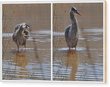 Spin And Fluff Dry Heron - C3219d Wood Print by Paul Lyndon Phillips