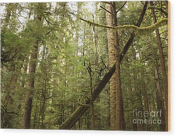 Spirit Of The Pacific Northwest Wood Print by Carol Groenen