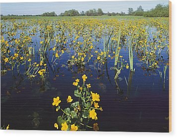 Spring Flood Plains With Wildflowers Wood Print by Norbert Rosing