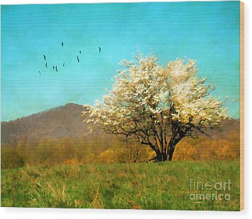 Spring In The Mountains Wood Print by Darren Fisher