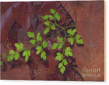 Spring Will Come Wood Print by Judi Bagwell