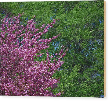 Springtime Wood Print by Lisa Phillips