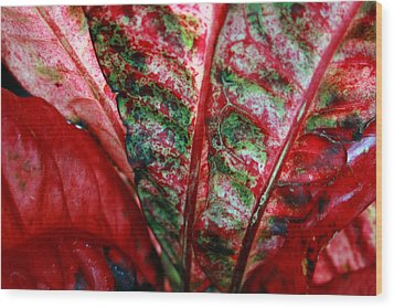 Study Of The Croton 2 Wood Print by Jennifer Bright