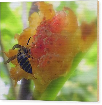 Succulent Fig Wood Print by Karen Wiles