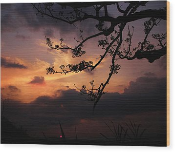 Sun Caught By Branches  Wood Print by Rosvin Des Bouillons