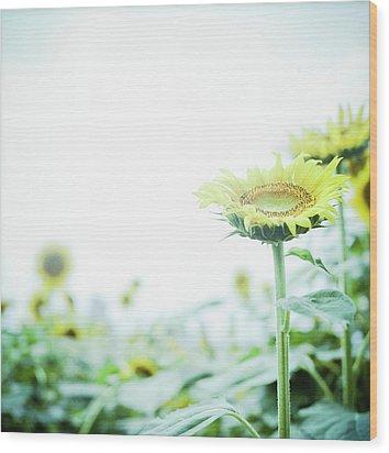 Sunflower Wood Print by Yoshika Sakai