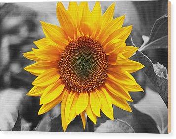 Sunflowers 3 Wood Print by Sumit Mehndiratta