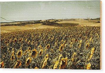 Sunflowers Field  Wood Print by Anja Freak