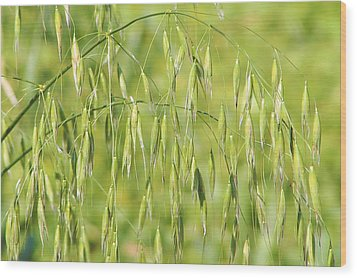Sunny Day At The Oat Field Wood Print by Christine Till