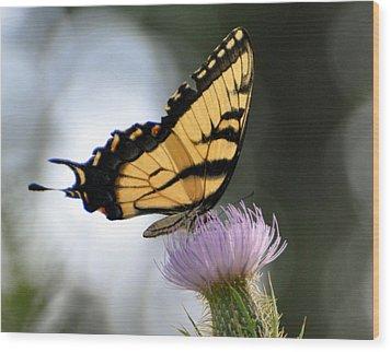 Swallowtail Wood Print by Marty Koch