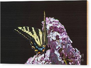 Swallowtail On Lilac 3 Wood Print by Mitch Shindelbower