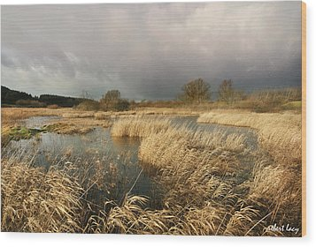 Swampland Wood Print by Robert Lacy
