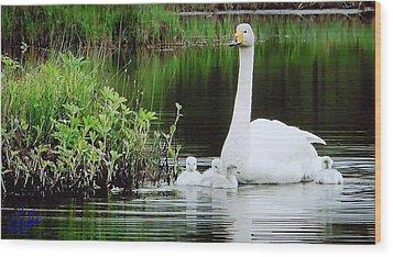 Swan Family Late Summer Wood Print by Colette V Hera  Guggenheim