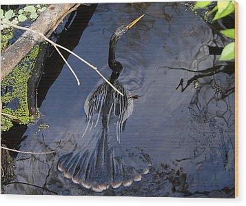 Swimming Bird Wood Print by David Lee Thompson